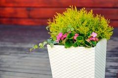 Fiori all'aperto dei vasi da fiori Immagine Stock Libera da Diritti