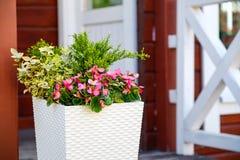 Fiori all'aperto dei vasi da fiori Immagine Stock