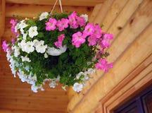 Fiori all'aperto dei vasi da fiori Fotografia Stock
