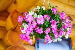 Fiori all'aperto dei vasi da fiori Fotografia Stock Libera da Diritti