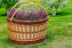 Fiori all'aperto dei vasi da fiori Immagini Stock Libere da Diritti
