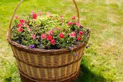 Fiori all'aperto dei vasi da fiori Fotografie Stock
