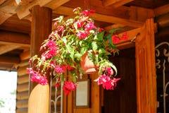 Fiori all'aperto dei vasi da fiori Sul portico Casa da una barra Contro i fiori della casa Immagine Stock Libera da Diritti