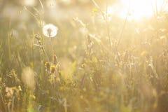 Fiori alla luce di tramonto fotografia stock