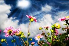 Fiori alla luce solare Fotografia Stock
