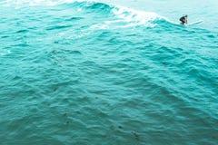 Fiori alla spiaggia di Wipeout a La Jolla Fotografia Stock
