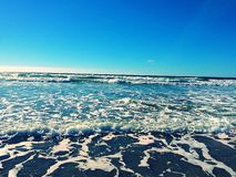Fiori alla spiaggia di Wipeout a La Jolla Fotografie Stock