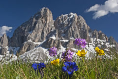 Fiori alpini fotografie stock