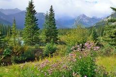 Fiori alpini sulla priorità alta e canadese Montagne Rocciose sui precedenti Strada panoramica di Icefields fra Banff ed il diasp Fotografie Stock
