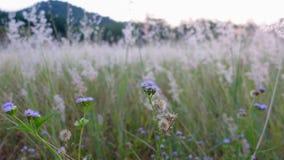 Fiori alti vicini dell'erba di selezione Fotografia Stock