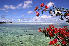 Fiori & scogliera rossi Fotografia Stock