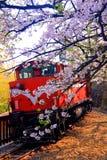 Fiori & treno di ciliegia Immagini Stock