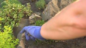 Fiori appassiti guarnizione del giardiniere archivi video