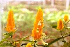 Fiori arancio Fotografia Stock