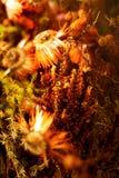 Fiori arancio del tempo di autunno Immagini Stock Libere da Diritti