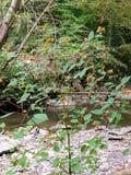 Fiori arancio sul cespuglio tramite la corrente Fotografia Stock