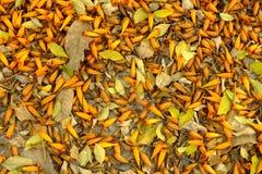 Fiori arancio sulla terra Immagini Stock Libere da Diritti