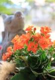 Fiori arancio vivi alti chiusi di colore di fiammeggiare Katy Succulent Plants con la piccola scultura vaga dell'uccello nel fond immagine stock