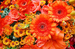 Fiori arancioni Immagini Stock