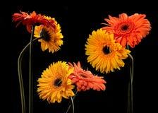 Fiori arancioni e gialli Immagine Stock Libera da Diritti