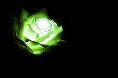 Fiori artificiali della luce di colore di notte Fotografia Stock Libera da Diritti
