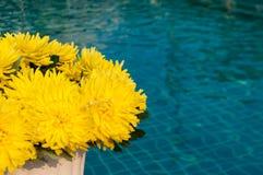 Fiori artificiali gialli del crisantemo dalla piscina Fotografia Stock