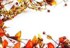 Fiori asciutti e frutti delle foglie di Autumn Background di caduta Fotografia Stock