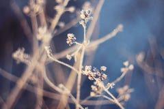 Fiori asciutti in neve sull'inverno fotografie stock libere da diritti