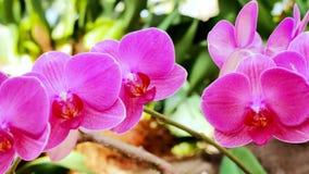 Fiori bei dell'orchidea che fioriscono nel giardino archivi video
