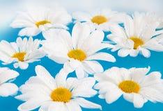 Fiori bianchi Immagine Stock