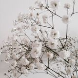 Fiori bianchi bei Immagini Stock