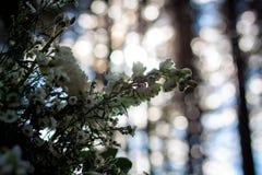 Fiori bianchi come decorazione alle nozze della foresta Fotografia Stock Libera da Diritti
