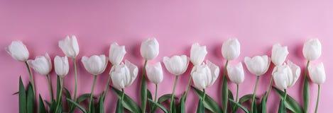 Fiori bianchi dei tulipani sopra fondo rosa-chiaro Cartolina d'auguri o invito di nozze immagini stock