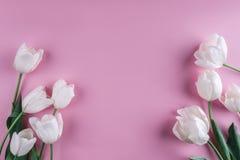Fiori bianchi dei tulipani sopra fondo rosa-chiaro Cartolina d'auguri o invito di nozze fotografia stock libera da diritti