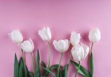 Fiori bianchi dei tulipani sopra fondo rosa-chiaro Cartolina d'auguri o invito di nozze Disposizione piana, vista superiore fotografia stock libera da diritti