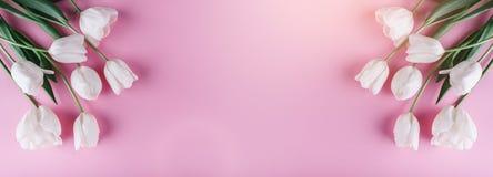 Fiori bianchi dei tulipani su fondo rosa Carta per il giorno di madri, l'8 marzo, Pasqua felice Molla aspettante Cartolina d'augu fotografie stock