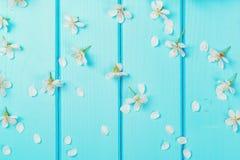 Fiori bianchi del fiore sugli ambiti di provenienza di legno blu Fotografie Stock Libere da Diritti