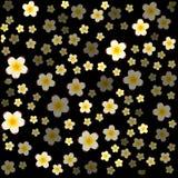 Fiori bianchi del gelsomino con il centro giallo su fondo nero immagine stock
