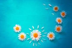 Fiori bianchi della camomilla fotografia stock