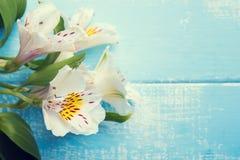 Fiori bianchi di alstroemeria Immagine Stock