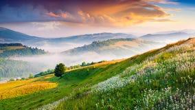 Fiori bianchi di fioritura nelle montagne di estate Fotografia Stock Libera da Diritti