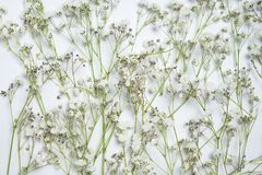 Fiori bianchi e foglie verdi della miscela fotografie stock