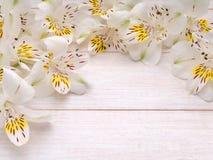 Fiori bianchi e gialli di alstroemeria Immagini Stock