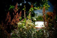 Fiori bianchi e verdi Fotografia Stock