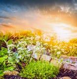 Fiori bianchi in giardino di rocce sopra il fondo della natura del cielo di tramonto Immagini Stock