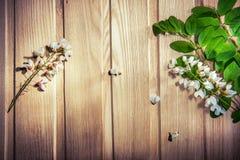 Fiori bianchi - l'albero di locusta fiorisce sulla cenere Fotografia Stock
