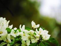 Fiori bianchi nel giorno romantico immagine stock libera da diritti