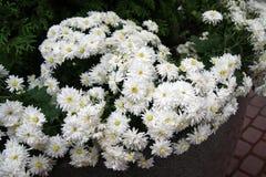 Fiori bianchi, nozze, giardino floreale, mazzo, natura immagine stock libera da diritti