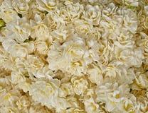 Fiori bianchi pallidi del narciso Fotografia Stock