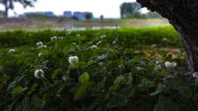 Fiori bianchi sotto l'albero immagini stock